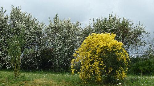 Des nouvelles de mon jardin en photos ;)