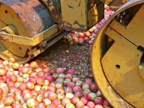 104 Nature Gu Dexin pommes rouleau compresseur
