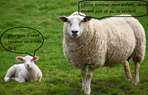 En revenir à ses moutons