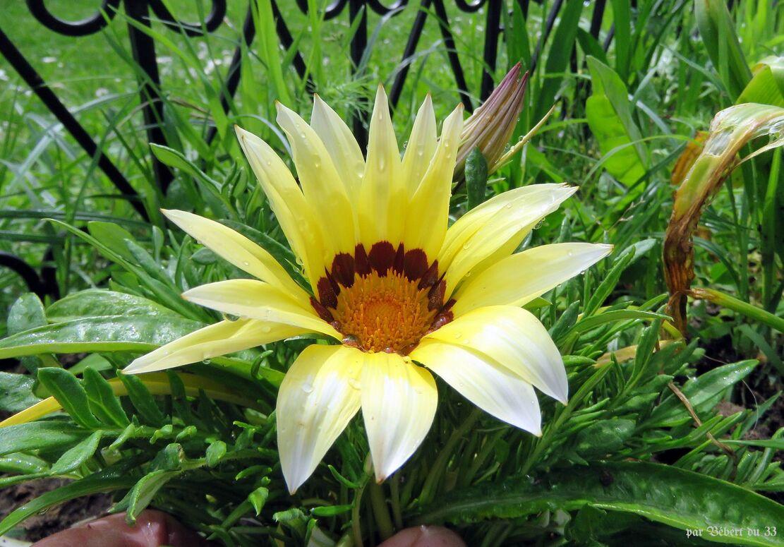 fleurs au jardin ...