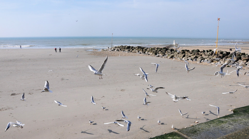 Wimereux... Ballet sur la plage
