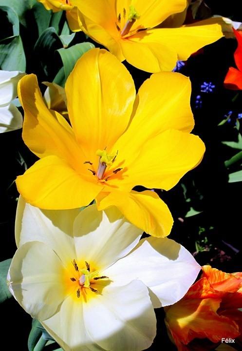 P04 - Blanc et jaune