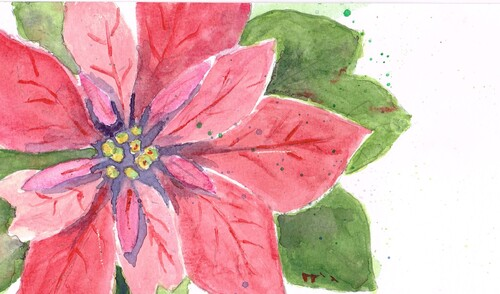 Poinsettia, peint par Marie