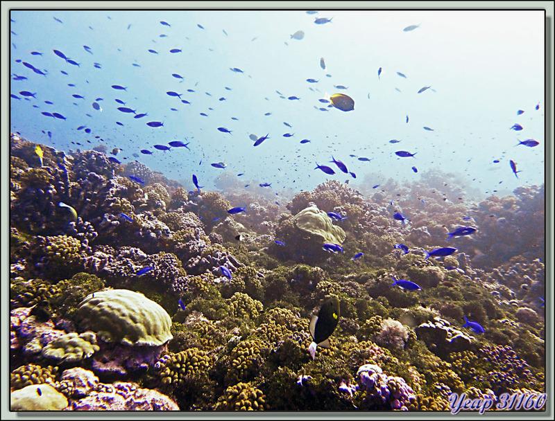 Plongée bouteille Passe de Tiputa : aquarium naturel - Rangiroa - Tuamotu - Polynésie française