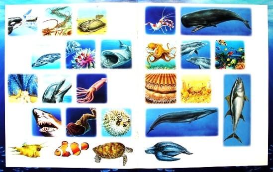 La-mer-activites-4.JPG