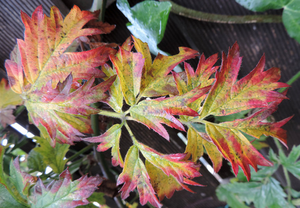 Dernières nuances de l'automne...