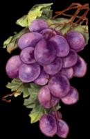 *** Zomer fruit ***