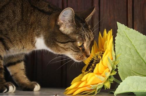Un chat peut-il avoir un rhume ?