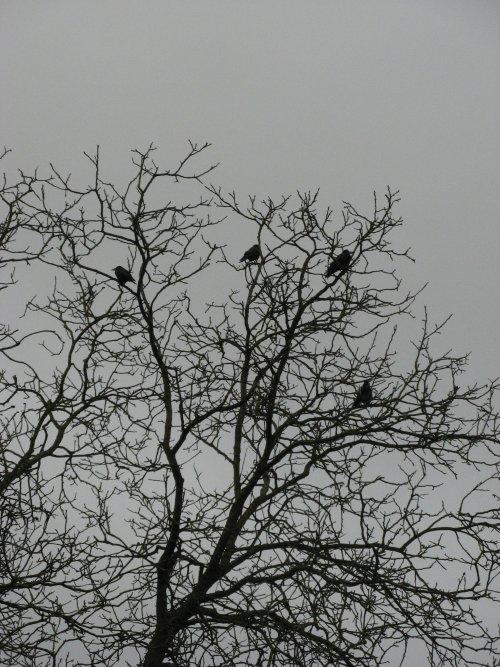 Un arbre en corbeaux