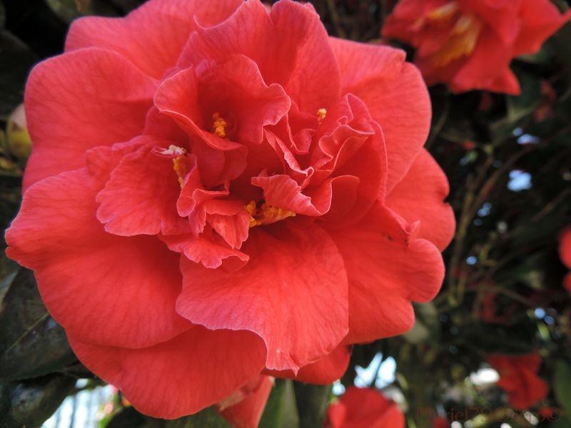 Florilège de couleurs au Gachignard (2)