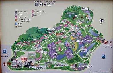 Ashikaga Flower Park あしかがフラワーパーク