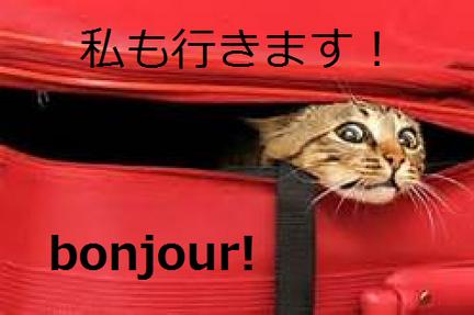 侍猫のフランス語