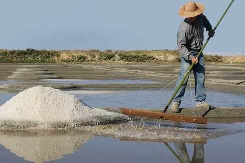 Le joli grain de sel de Guérande