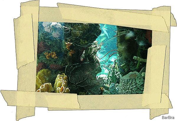 PORTOGALLO 15 - 22 settembre 2008 356.2