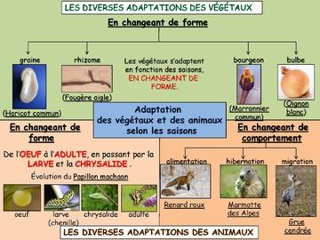 Cartes mentales sur les adaptations des êtres vivants selon les saisons