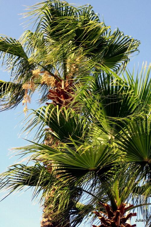 Le haut des palmiers
