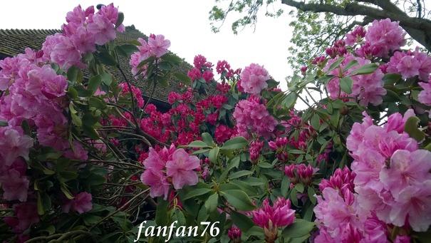 Poupette dans les rhododendrons !