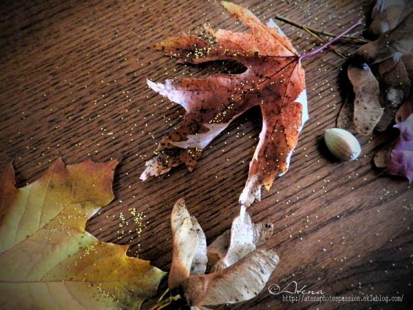 Beautée des feuilles