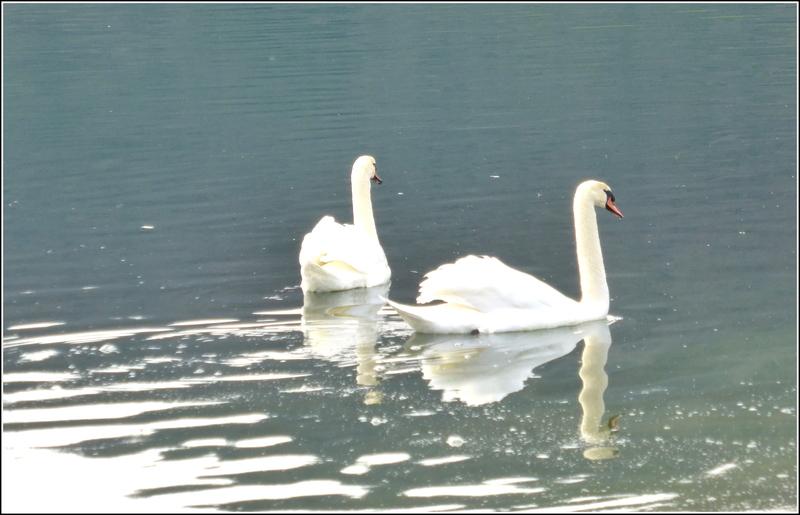 Balade au Lac du Lit du Roi : 2/2