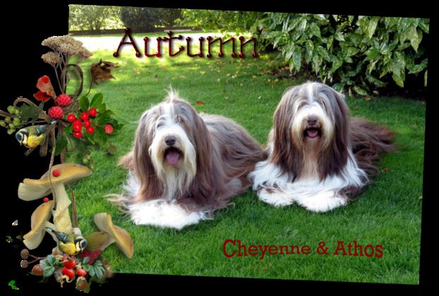 ♥ Bonne fin de semaine d' Athos & Cheyenne ♥