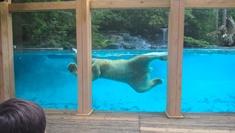 Zoo de la flèche : l'ours polaire Taïko