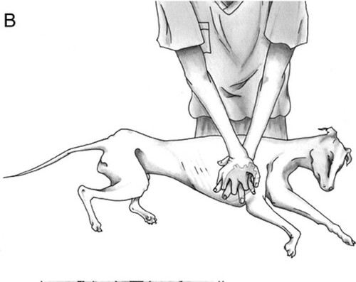 Gestes pour sauver la vie de votre animal