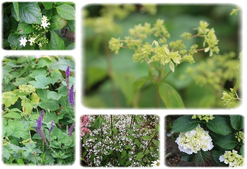 Le joli jardin de Fabienne