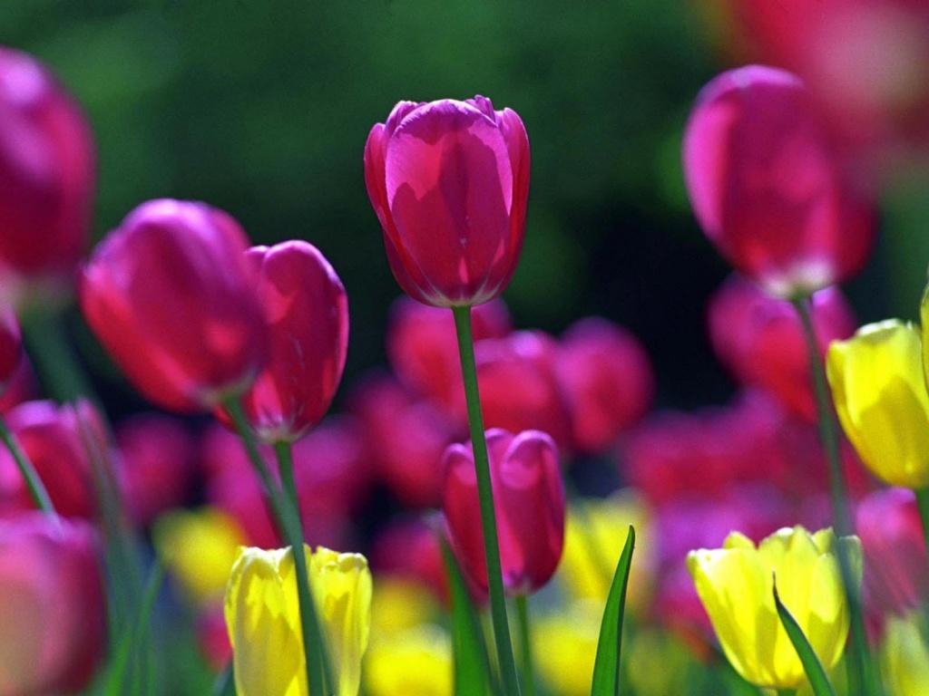 Virágfotók nagy méretben - tavaszi hátterek