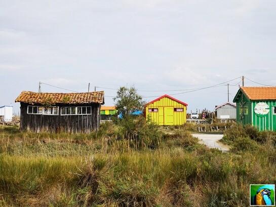 Balade Île d'Oléron septembre 4/4