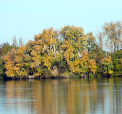 Chronique des jours d'automne - Chronicle of the autumn days