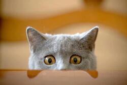 Petit chat curieux.