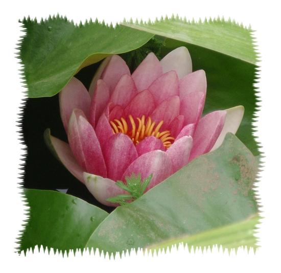 fleur des 3 ans - anniv - 2010-08-22 août