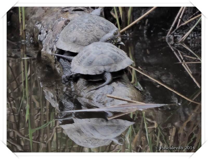 En vadrouille à la réserve ornitho du Teich - 1/13