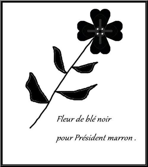 Fleur de blé noir .