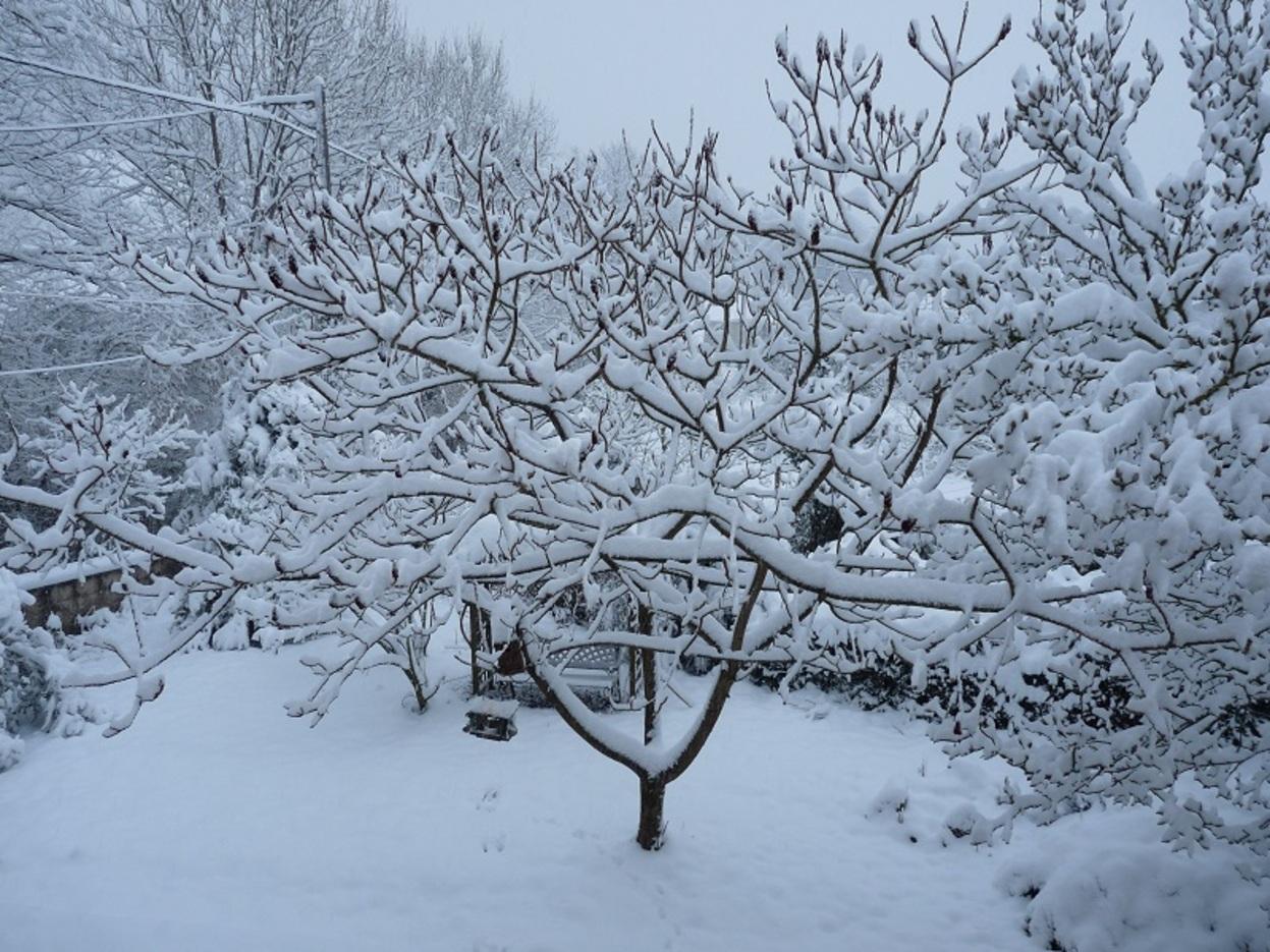 Notre jardin, ce matin.