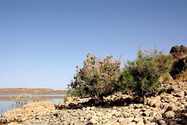 tortues-Bivouac-vers-Ouarzazate-022.jpg