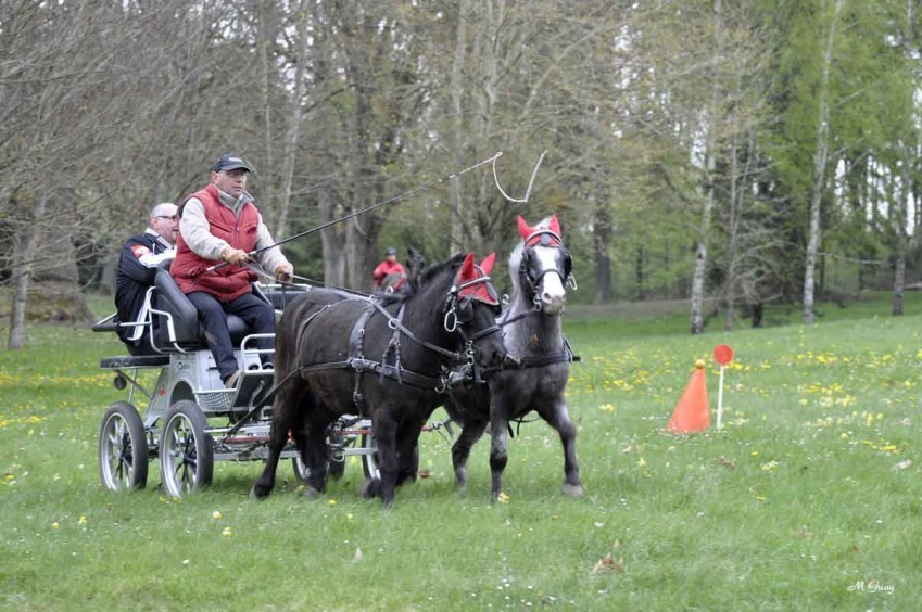 course-chevaux-2033.jpg