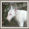 Caid 1