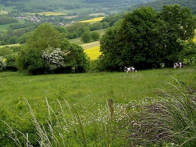 Moselle par Bernard 36 Marc de Metz 2012