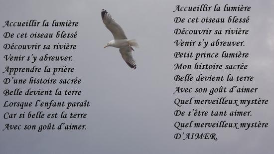 Chansons Acueillir La Lumière Dun Oiseau Blessé Le