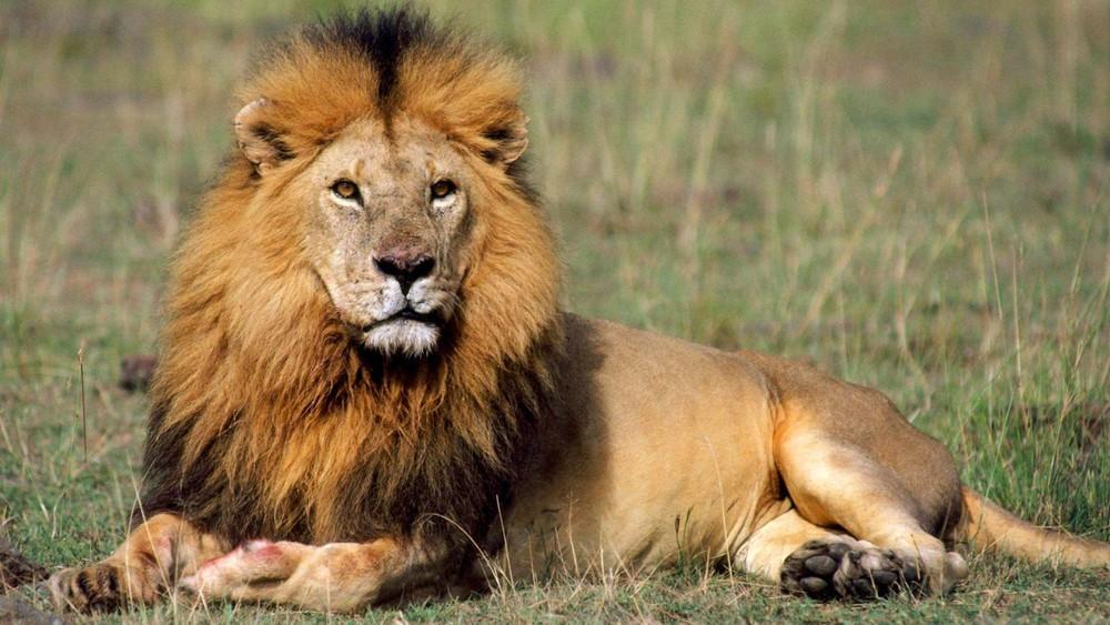 Assez Le lion et le chasseur Jean de La Fontaine - Akia WE54