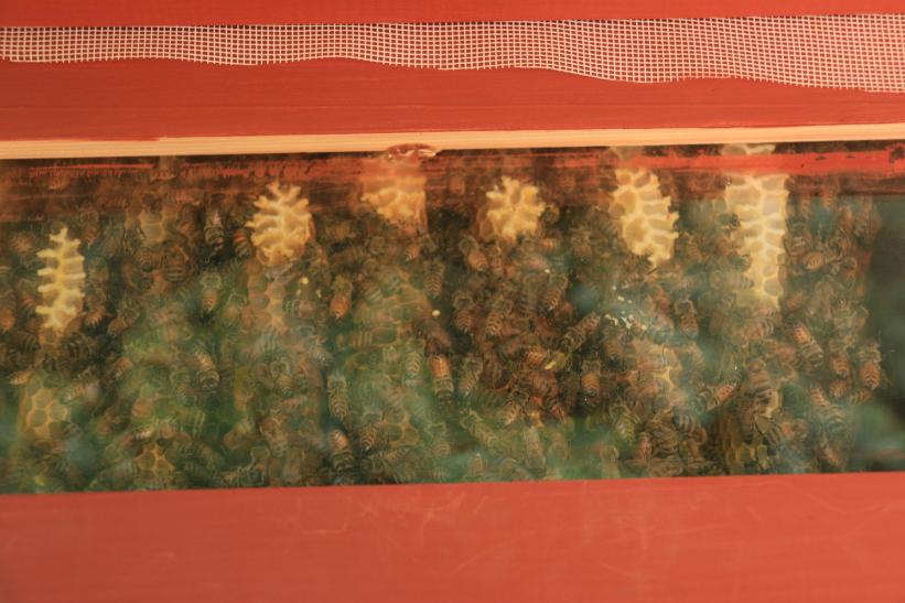 vue de la ruche Warré à la vitre