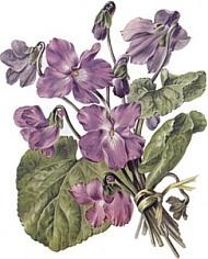 Violette La France