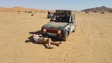 """""""Les tortues du désert"""", un article de Ella, Elisabeth, Nicolas, Matthias"""