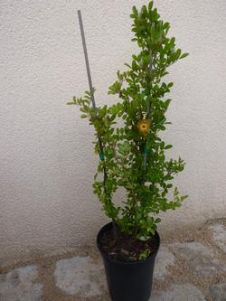 foire aux plantes à plougasnou