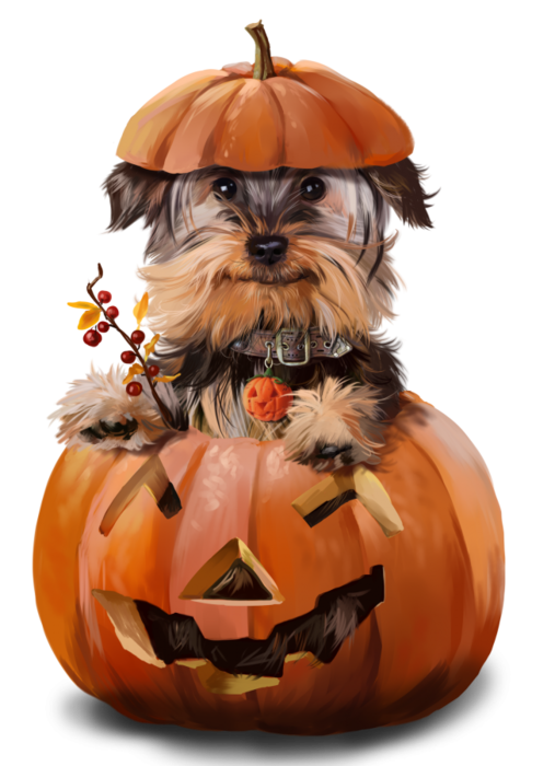 Tubes Animaux Halloween