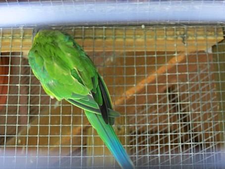 les-oiseaux-et-autres-volatiles-0112.JPG