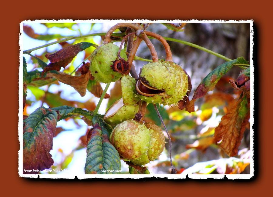 Pornic en automne
