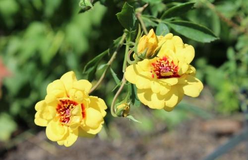 Marché aux fleurs et nouveautés dans le jardin