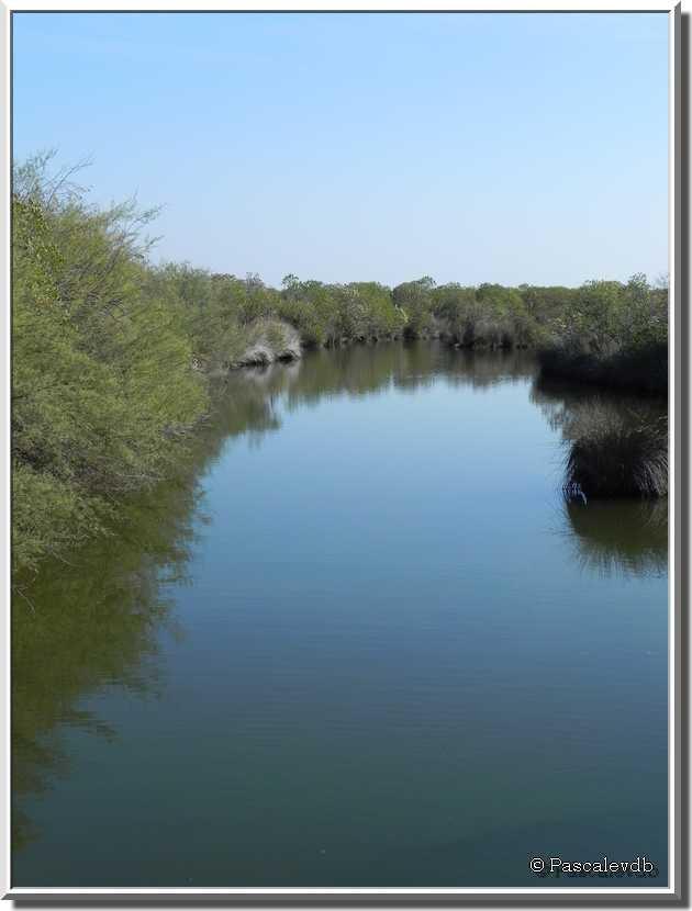 Sortie au parc ornitho du Teich